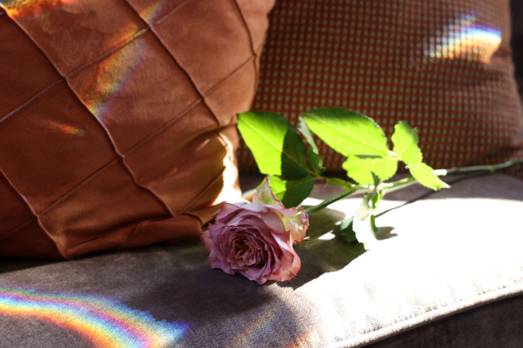 トリートドレッシングから提案する薔薇のブーケ