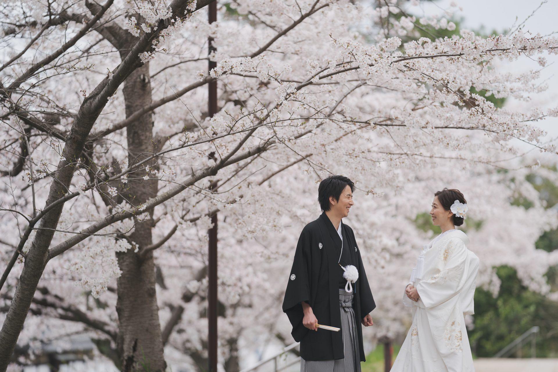 京都の桜のシーズンで撮影されたザトリートドレッシングの白無垢と黒羽二重を着用された前撮り